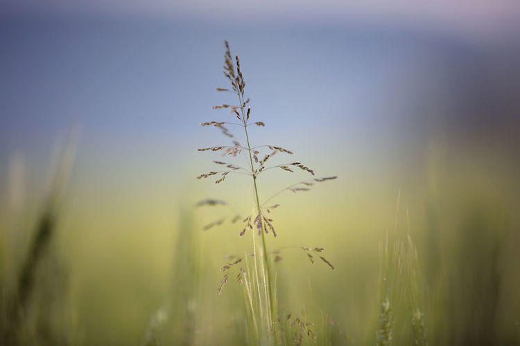Close-up of fresh plant in field against sky