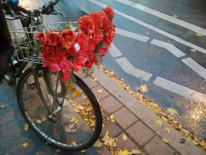 Beauty In Nature Biking In R Colourful Bike Fall Colors Flower Outdoors Rain And Roses Transportation Wet Roads And Leave