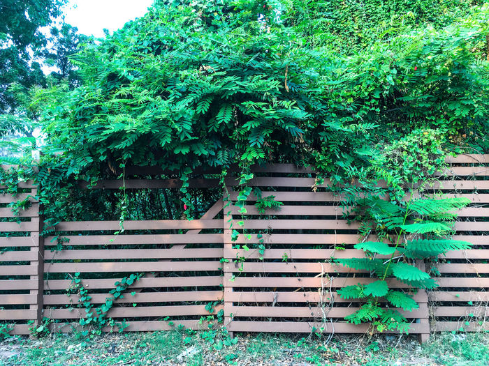 Plants on wooden fence in garden Green Color Nature Pattern, Texture, Shape And Form Patterns In Nature Abstract Background Beauty In Nature Climbing Cover Creeper Plant Fence Garden Geeen Green Color Growth Leaf Leaves Nature Outdoors Pattern Plant Plant Part Rough Stained Wood - Material