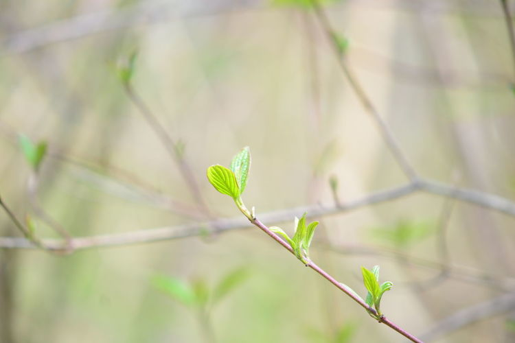 Plant Growth Plant Part Close-up Green Color Leaf Nature Beauty In Nature No People Day Focus On Foreground Selective Focus Outdoors Beginnings Fragility Tranquility Vulnerability  Plant Stem Freshness Sunlight