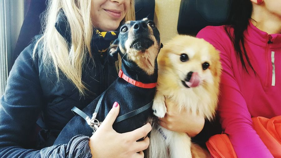 best friends Train Pincher Pomeranian Friendship Pets Togetherness Bonding Sitting Women Smiling Dog Young Women Happiness Pet Owner Pampered Pets Loyalty Animal Face Pet Leash