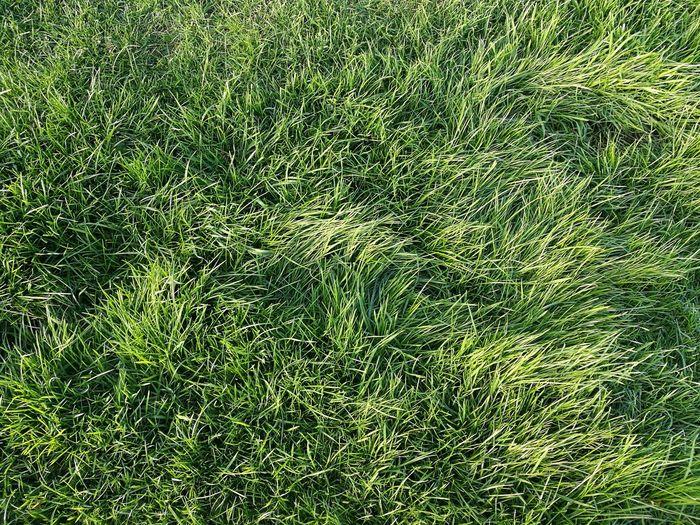 Grass Hello World First Eyeem Photo