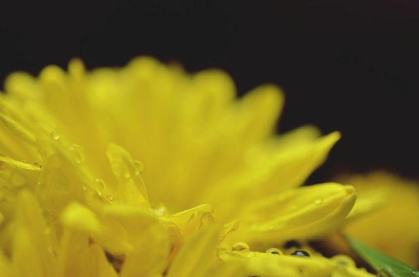 EyeEm Best Shots - Flowers 雨のあと EyeEm Nature Lover Flowers