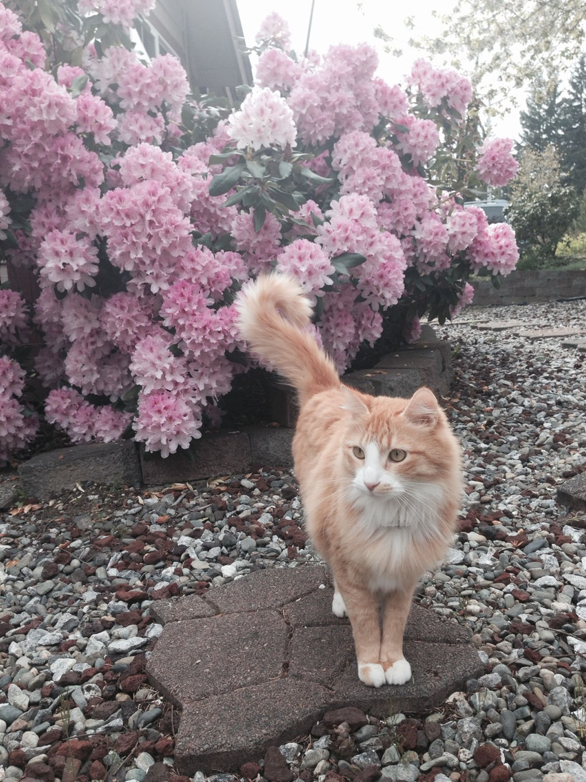 flower, one animal, animal themes, pets, domestic animals, domestic cat, mammal, cat, plant, growth, nature, pink color, outdoors, day, beauty in nature, leaf, fragility, dog, freshness, no people