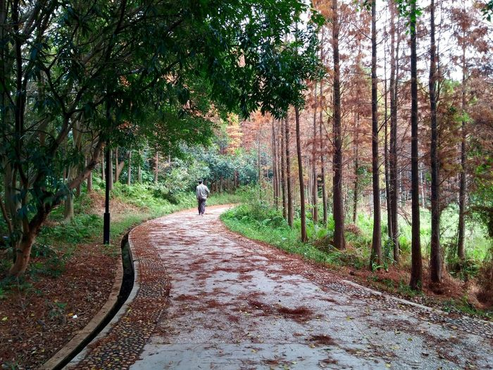 Peaceful Walk Peaceful Place Serene Geometry In Nature Taking A Stroll Traveling In China China Beauty In Nature Winter Guangdong Feel The Journey