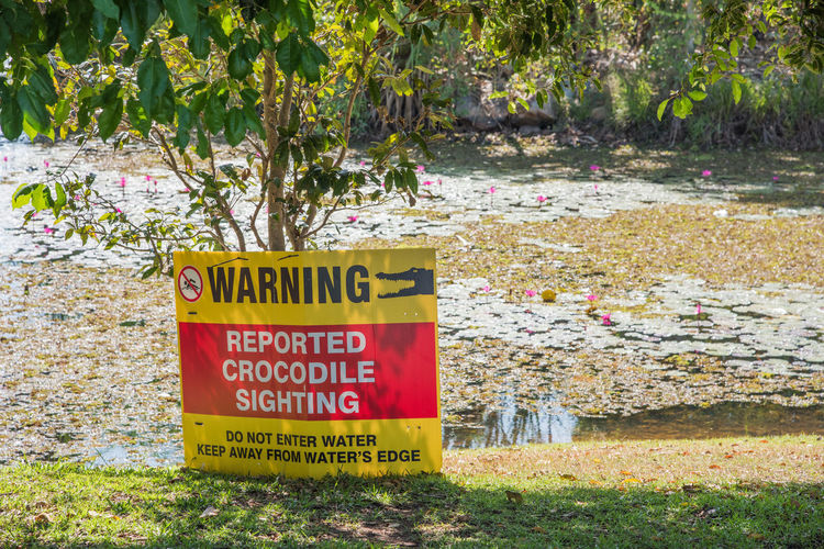 Darwin, Northern Territory, Australia-September 14,2018: Reported crocodile sighting warning sign by wetland pond in Darwin, Australia Text Communication Western Script Sign Plant Nature Day Tree No People Warning Sign Information Land Grass Information Sign Capital Letter Sunlight Message Red Yellow Animal Themes Safety Water's Edge Wetland Pond Lotus Water Lily Lotus Pond Lake Sunny Crocodile Saltwater Crocodile Sighting Warning Warning Signs  Warning Symbol Serious Precaution Caution Caution Sign Danger Dangerous Dangerous Animals Dangerous Situation Darwin Northern Territory Australia Red And Yellow Bright Vibrant Color Landscape Guidance