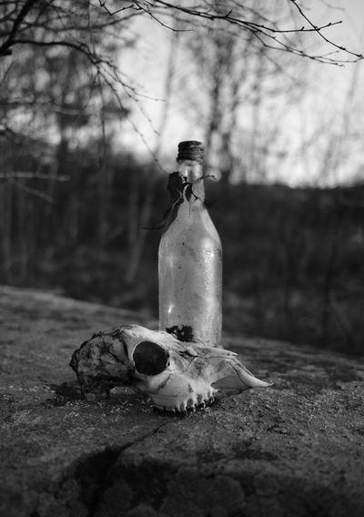 Animal Skull And Bottle On Retaining Wall