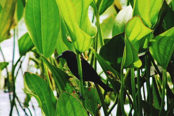 Leaf One Animal Animal Wildlife Animals In The Wild Nature Green Color Plant Animal Themes Bird Perching Outdoors Beauty In Nature No People Tree Growth Day Close-up Hornbill Birds Photoshop Photo Editor Pro Photographing Art Photography PortraitPhotography Photographer