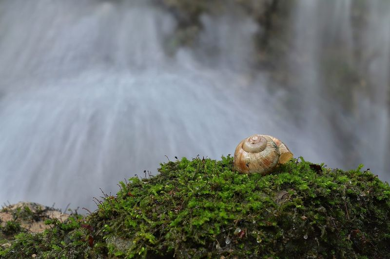 """Waterfall & Snail"" Https://www.facebook.com/mh.photography.de/ Michael Hruschka Langzeitbelichtung Long Exposure Wasser Water Snail Collection Nature Nature Schneckenhaus Schnecke Wasserfall Landscape Waterfall One Animal Animal Themes Nature Snail Animals In The Wild No People Day Beauty In Nature Close-up Outdoors"