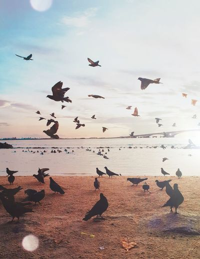 Birds over the