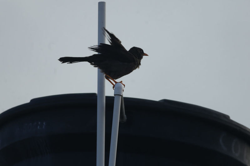 Low angle view of bird perching
