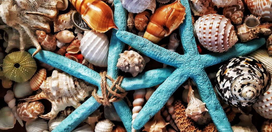 Shell Shells Starfish  Conch Close-up