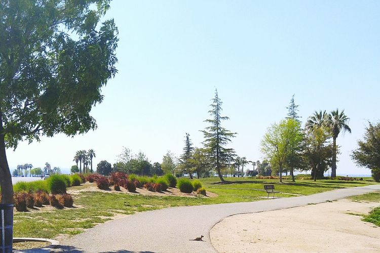 Thebluffs Bakersfield Kerncounty California California Love Beautiful Beautifulview Beautifulnature Nature Nature_collection Naturephotography Naturelover Squirrel Squirrel Friend  Niceday Sunny Day Sunshinestate Niceweather Springtime <3 Trees Tree_collection