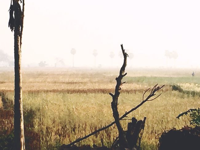 Field Nature No People Landscape Outdoors Day Tree Grass Beauty In Nature Scenics Sky Dead Tree Foggy Morning First Eyeem Photo The Great Outdoors - 2017 EyeEm Awards Live For The Story