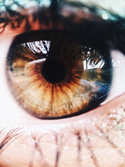 Because eyes are windows into one's soul EyeEm Best Shots Eye Macro Check This Out Iphonephotography