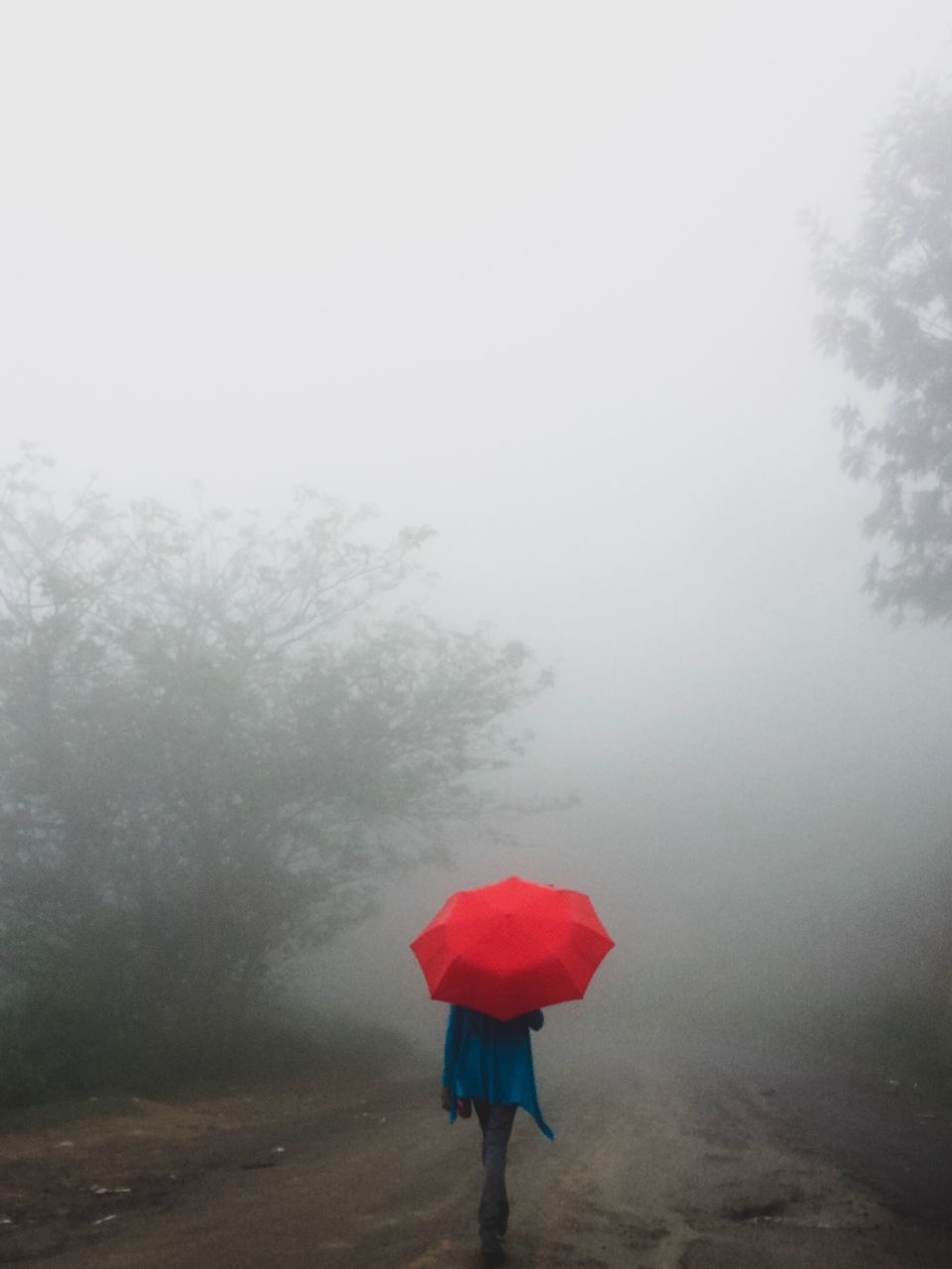fog, one person, tree, real people, plant, umbrella, rear view, nature, beauty in nature, land, sky, standing, day, lifestyles, protection, leisure activity, women, tranquility, outdoors, rain, rainy season