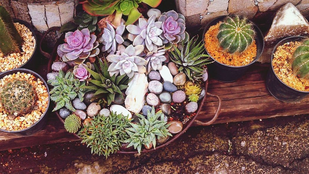 Echeveria Cactaceae Plants Naturebeauty <3