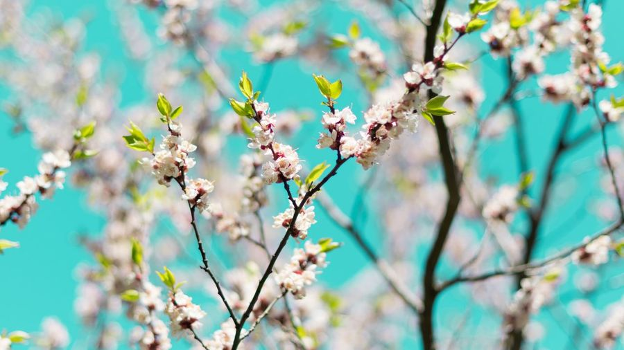 Plant Flowering Plant Flower Fragility Beauty In Nature Growth Tree Low Angle View Botany Petal Day Springtime Focus On Foreground Nature Blossom Vulnerability  Freshness Branch No People Close-up