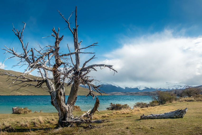 A tree near Laguna Azul (Blue Lake) in Torres del Paine, Chile Chile Patagonia Chile Tree Trunk Wood Bare Tree Beauty In Nature Branch Cloud - Sky Day Dead Tree Lake Lake View Landscape Mountain Nature No People Outdoors Patagonia Scenics Sea Sky Tranquil Scene Tranquility Tree Water