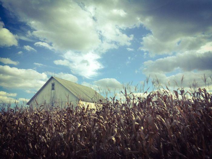 Farm life Cloud