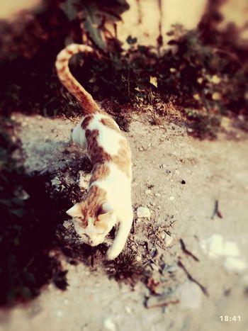 Cat♡ Cat Animals My Cat Taking Photos Hi!