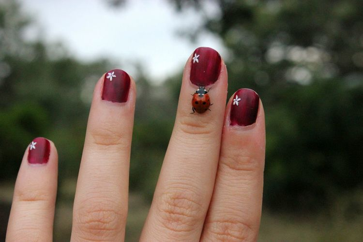 Close-up of lady bug on woman hand
