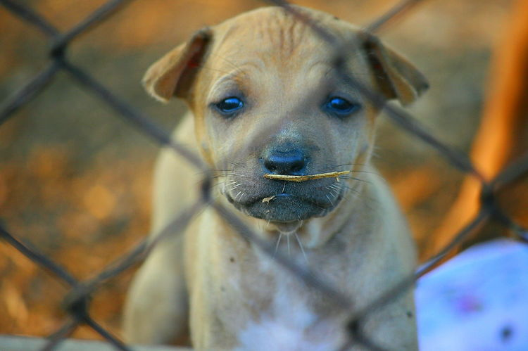 Animal Themes Chainlink Fence Close-up Day Dog Dog Feeling Dog In Cage Domestic Animals Focus On Foreground Looking At Camera Mammal No People One Animal Outdoors Pets Portrait Sadness Dog