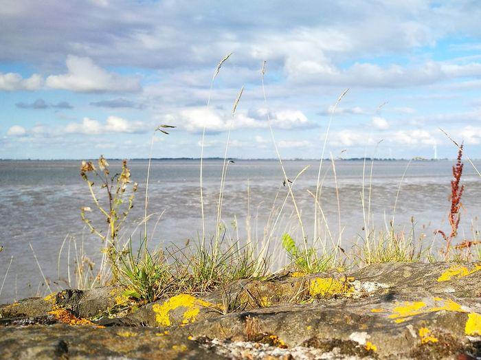 Sea View Delfzijl Eems Naturelovers
