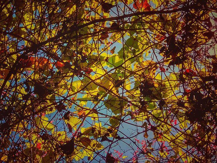 Ivy Creeper Ivy Plant Creeper Plant Ivy Photography Creeper Photography Creeper Collection Ivy Collection Color Of Nature Nature Color Beauty Of Nature Colorful Nature Nature Nature Photography Nature Collection Nature Art Nature Art Photography Nature Art Collection Beauty Of Ivy Beauty Of Creeper
