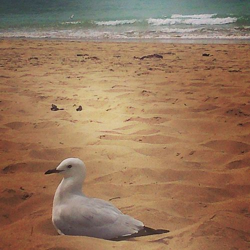 Today, a Gull came and Nonchalantly Nested right in front of me. Perhaps they are getting smarter after all!