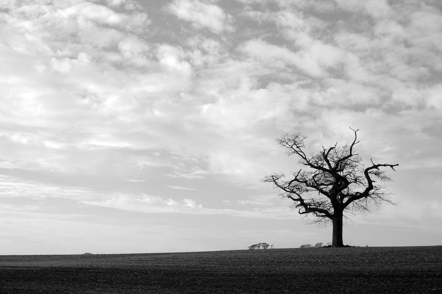 Standing Alone Bare Tree Beauty In Nature Black And White Blackandwhite Cloud - Sky Field Horizon Isolated Landscape Nature Outdoors Plant Single Tree Sky Solitude Tranquil Scene Tranquility Tree