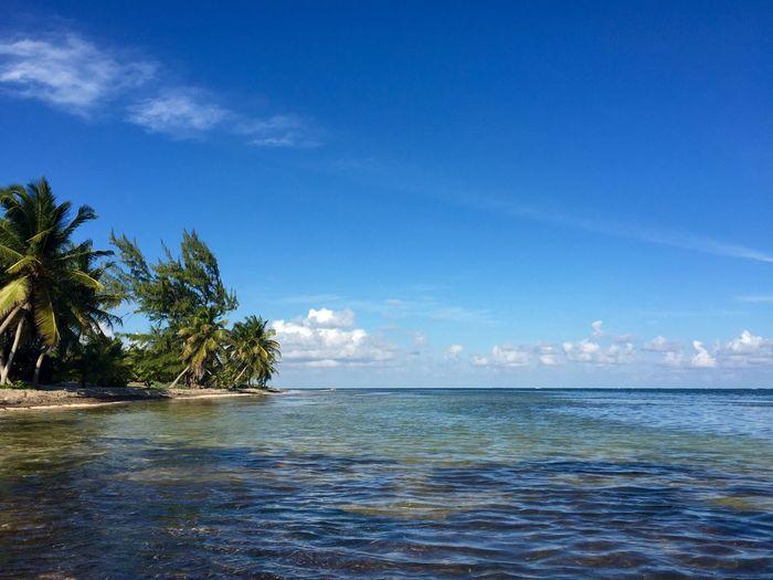 The beach in Mahahual Mexico Mahahual Beach Palm Trees Caribbean Sea Sky Water Quintana Roo Nature
