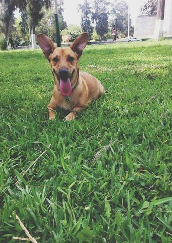 Valentina Gorditaybonita MiHermosa Mybaby Dog Campodemarte Lima-Perú