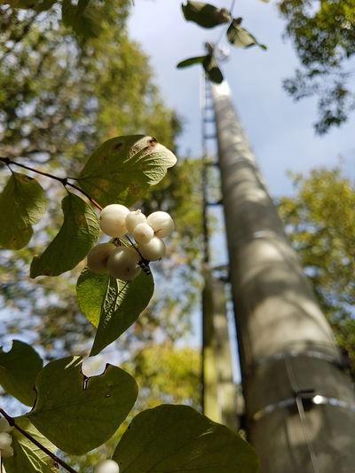 Knallerbsenstrauch Tree Branch Leaf Close-up Sky Autumn Mood