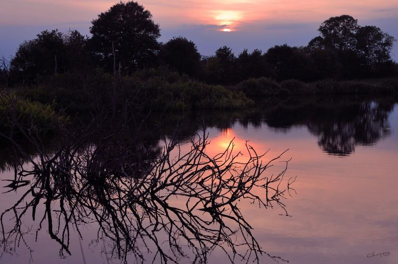 Sonnenuntergang in Norddeutschland Tree Plant Water Reflection Sunset Lake Tranquility Sky Beauty In Nature Scenics - Nature Outdoors Cloud - Sky No People Silhouette Nature Orange Color Idyllic