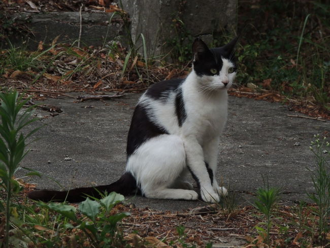 Cat Day Domestic Domestic Animals Domestic Cat Feline Looking Looking Away Mammal Nature No People One Animal Pets Plant Sitting Vertebrate Whisker White Color