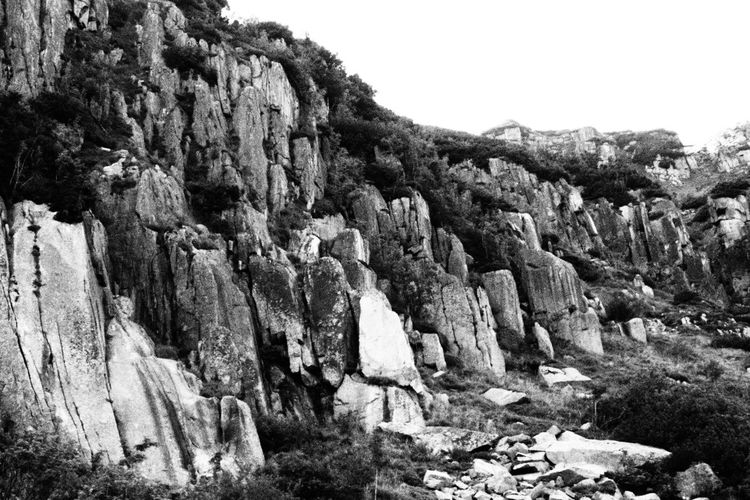 Growth Tree Nature No People Outdoors Day Landscape Beauty In Nature Black & White Close-up Rocks Mountains Poland Karkonosze Karpacz