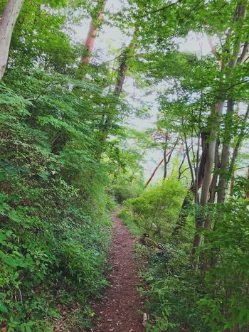 Plant Tree Growth Green Color Nature Beauty In Nature Day Footpath Sunlight Forest Grass No People Outdoors Lush Foliage Tranquil Scene Freshness The Way Forward