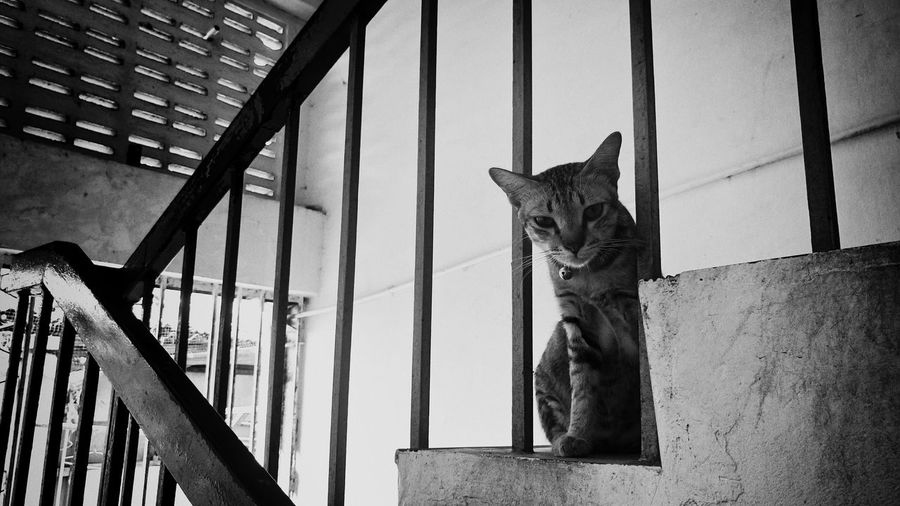 View of cat sitting on staircase by handrail