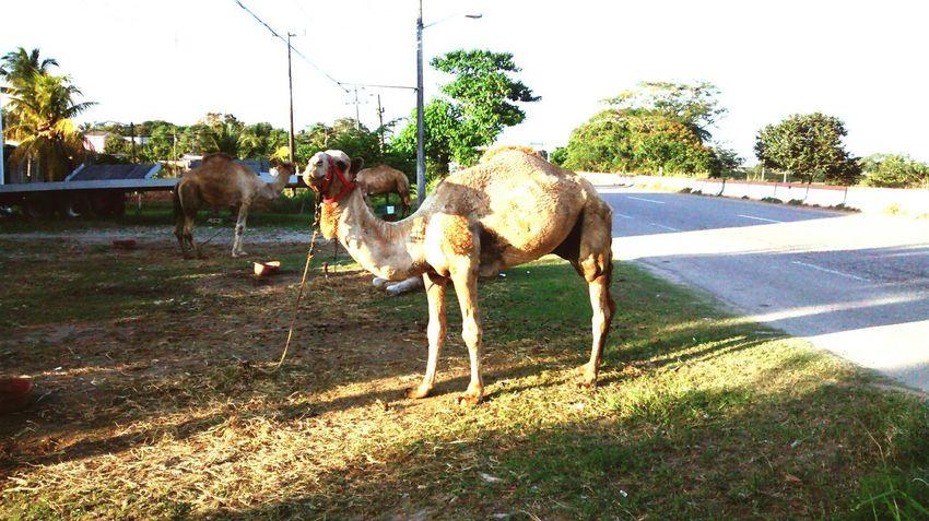 Animals Taking Photos Walking Around Found On The Street Hello World Pet Nature Followme
