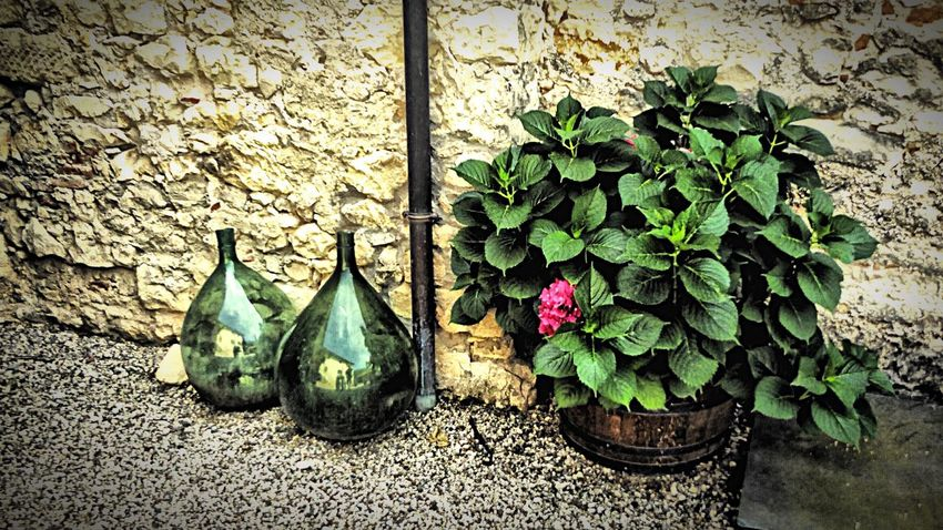 Italy🇮🇹 Winebottles Wine Tasting Wineandmore Wine Time Wineglass Wineballon Plant Growth Flower Leaf Pebble Day Fragility Freshness Outdoors Watering Can Green Green Color Blooming Gravel No People