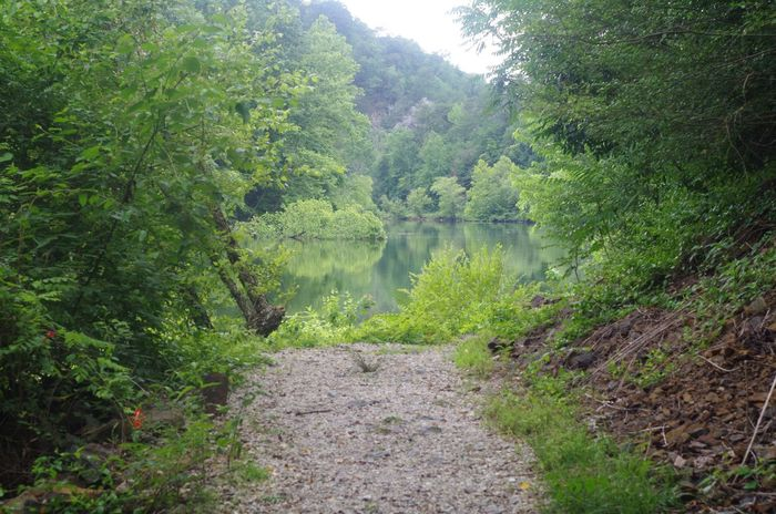 Beauty In Nature Day Forest Growth Nature No People Outdoors Plant River Scenics Tranquil Scene Tranquility Tree Water