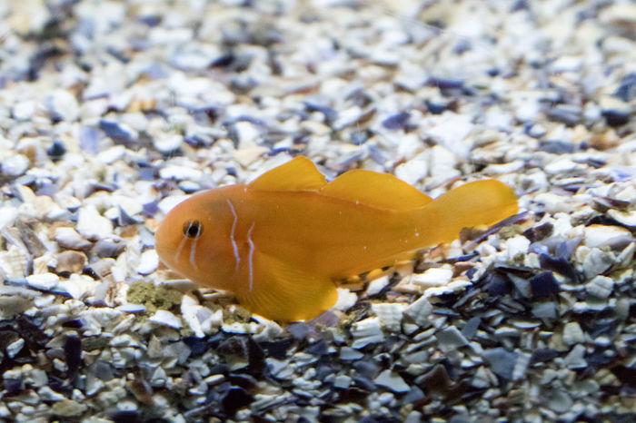 Animal Themes Animals Aquarium Aquarium Life Close-up Eye4photography  EyeEm EyeEm Best Shots EyeEmBestPics Fish Fish Photography From My Point Of View Underwater