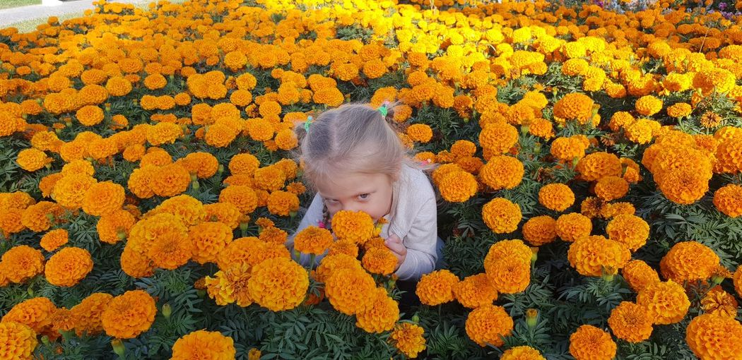 Flower Flower Head Child Childhood Blond Hair Girls Yellow Autumn Playing Cute Domestic Animals Butterfly - Insect Pet Collar Domestic Cat Stray Animal Symbiotic Relationship Ginger Cat Pet Bed Animal Antenna Whisker Pollination Tabby Siberian Husky Persian Cat  Kitten French Bulldog Feline A New Beginning