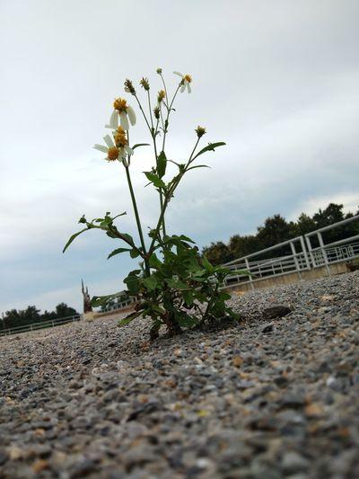 โดดเดียว Tree Flower Water Sky Plant Cloud - Sky