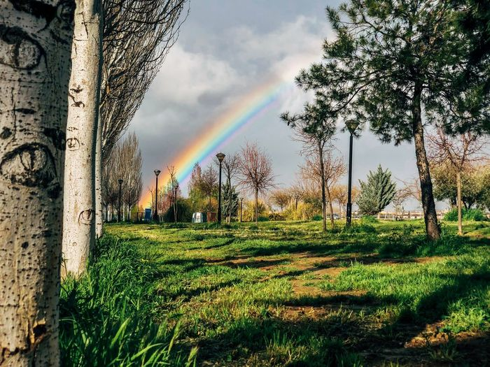 Rainbow 🌈 Andalucía Cloud Rain Rainy Days Tree Park Colors Rainbow Sky Rainbow Plant Sky Cloud - Sky Tree Nature Day Growth Grass Landscape Environment Scenics - Nature Outdoors Field
