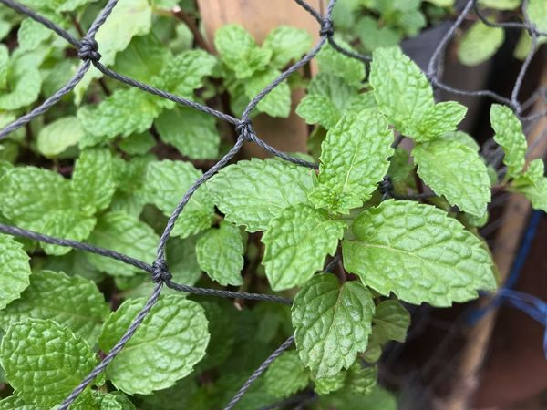 Morning everyone Green Color Leaf Plant Part Plant Growth Nature Close-up
