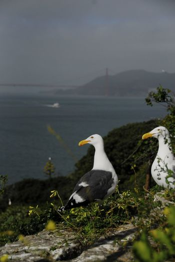 Scenic view of seagulls against golden gate bridge over bay