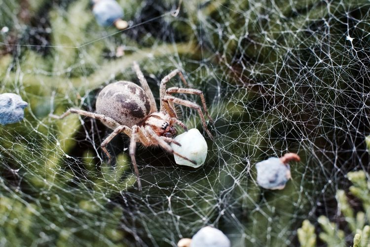 Close-up of spider of with prey on web