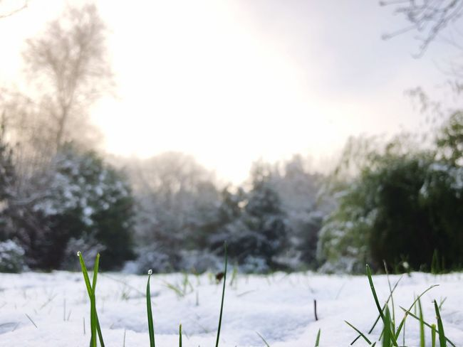 •early morning• Tadaa Community Morning Winter Cold Temperature Snow Nature Weather Field Beauty In Nature No People Outdoors Focus On Foreground Tranquil Scene Scenics Close-up Sky